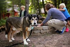El perro de la familia que hace una pausa como hombre y los niños comienzan la hoguera en el bosque fotografía de archivo