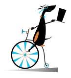 El perro de la historieta monta una bici Fotografía de archivo libre de regalías