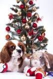 El perro de la Navidad celebra la Navidad con el árbol en estudio La chuchería de la Navidad adorna las bolas de cristal y a rey  Foto de archivo