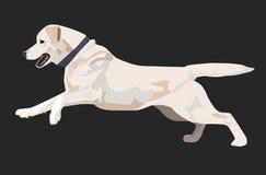 El perro de Labrador está corriendo Imagenes de archivo
