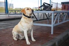 El perro de las aduanas Imagenes de archivo