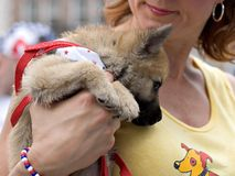 El perro de Orfan adopta Imagen de archivo