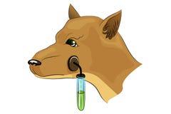 El perro de Pavlov experimentos ilustración del vector