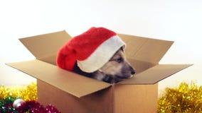 El perro de perrito hermoso en el sombrero de Papá Noel se sienta en una caja de cartón con las decoraciones de la Navidad y del  metrajes