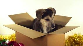 El perro de perrito hermoso se sienta en una caja del franqueo con las decoraciones de la Navidad y del Año Nuevo almacen de video