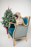 El perro de perrito lindo cerca adornó el árbol de navidad en estudio foto de archivo