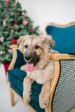 El perro de perrito lindo cerca adornó el árbol de navidad en estudio fotos de archivo libres de regalías