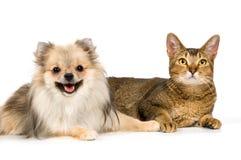 El perro de Pomerania-perro y el gato Imagenes de archivo