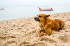 El perro de rasgado llenó de emociones por la playa Imagenes de archivo
