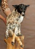El perro de un refugio de animales sin hogar Fotos de archivo libres de regalías