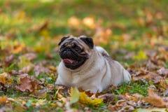 El perro del barro amasado está mintiendo en la tierra Imagen de archivo libre de regalías