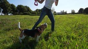 El perro del beagle salta arriba para coger el juguete, juego con la muchacha sonriente feliz, cámara lenta metrajes