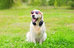 El perro del golden retriever en gafas de sol rojas con los auriculares escucha música en hierba Fotos de archivo libres de regalías