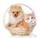 El perro del perro de Pomerania abraza un gato en cesta foto de archivo