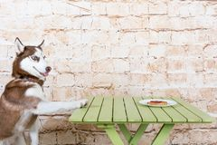 El perro del ` s de la cáscara roba un pedazo de salchicha de la tabla en secreto de los dueños Foto de archivo
