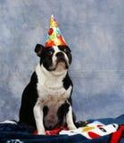 El perro desgasta un sombrero del partido Imagen de archivo