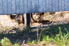 El perro detrás de la cerca Fotografía de archivo