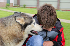 El perro dice su tete-a-tete del secreto Foto de archivo libre de regalías
