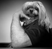 El perro dirigió al hombre imagen de archivo