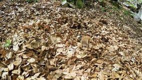 El perro divertido del beagle nada en piscina otoñal de las hojas