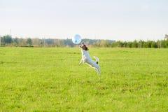 El perro divertido que juega con el globo azul salta en la acción en el campo Fotos de archivo libres de regalías