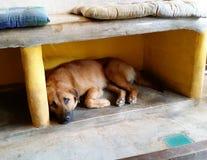 El perro a dormir Fotos de archivo libres de regalías