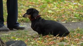 El perro en Autumn Park metrajes