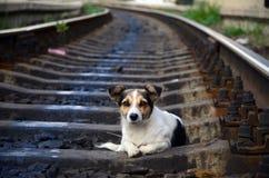 El perro en el ferrocarril Fotos de archivo libres de regalías