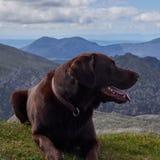 El perro en la cumbre de la cabra cayó isla Escocia de Arran Foto de archivo