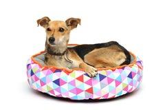 El perro en la manta Fotos de archivo libres de regalías