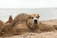 El perro en la orilla del mar, enterrada en la arena en la forma de una tortuga y de una cabeza que resalta imagen de archivo