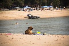 El perro en la playa en Punta hace Ouro en Mozambique Foto de archivo
