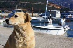 El perro en un embarcadero Imágenes de archivo libres de regalías