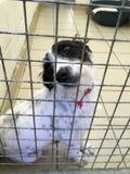 El perro en un refugio del rescate se sentó en una jaula fotos de archivo libres de regalías