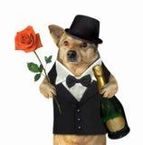 El perro en un traje sostiene el vino y una rosa fotos de archivo