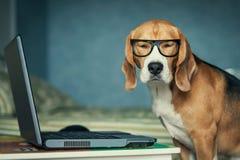 el perro en vidrios divertidos acerca al ordenador portátil fotos de archivo libres de regalías