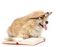 El perro en vidrios leyó el libro mirada de la cámara en b blanco Foto de archivo