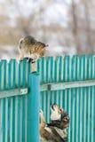 El perro enojado persiguió el gato en una alta cerca de madera en el pueblo fotos de archivo