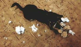 El perro ensucia Imagen de archivo libre de regalías