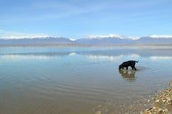 El perro entra en el lago Foto de archivo