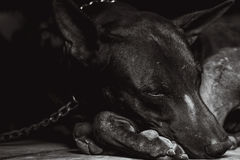 El perro es bloqueado Fotografía de archivo libre de regalías