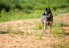 El perro espera al dueño Imagenes de archivo