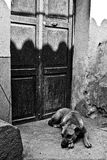 El perro espera al dueño Fotografía de archivo libre de regalías