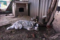 El perro está al lado de su caja Detalles y primer imagen de archivo