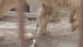 El perro está comiendo un cráneo humano almacen de metraje de vídeo