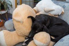 El perro está durmiendo en peluches Foto de archivo