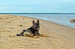 El perro está en los bancos del río Fotografía de archivo libre de regalías