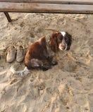 El perro está esperando a la señora en una playa fotos de archivo
