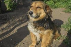El perro está esperando a su dueño Imágenes de archivo libres de regalías
