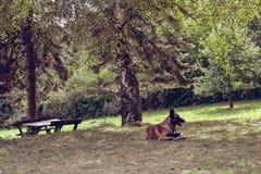 El perro está gozando en la yarda de la casa del pueblo, Serbia Foto de archivo